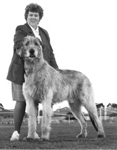 Irish Wolfhound Clubs of NSW & SA