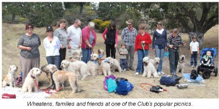 The Soft Coated Wheaten Terrier Club Of Victoria Inc